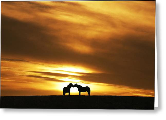 Gold Lime Green Greeting Cards -  Equine Kiss Greeting Card by Adrian Campfield
