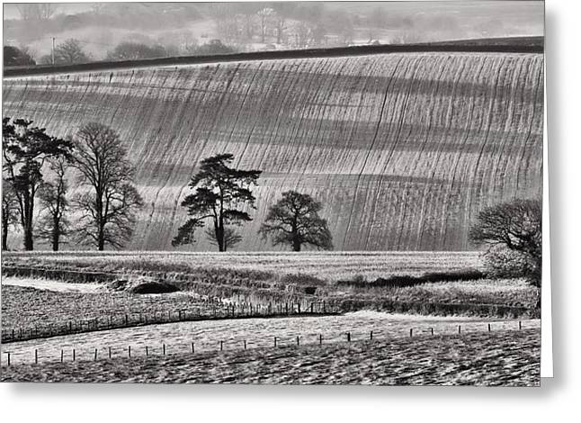 Culm Greeting Cards -  Fields and trees Greeting Card by Pete Hemington