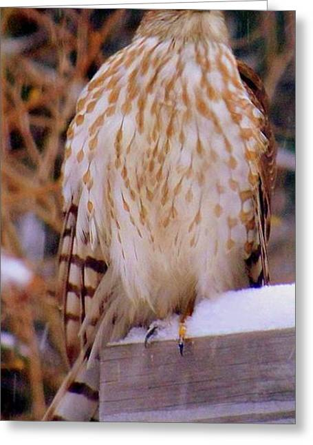 Winter Landscape With Animals Greeting Cards - Coopers Hawk Flew In With The Winter Storm Greeting Card by Eunice Miller
