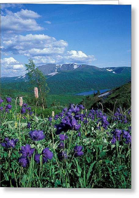 Wildflower Photograph Greeting Cards -  Flowers Greeting Card by Anonymous