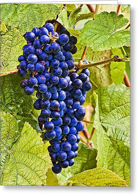 Popular Fruit Greeting Cards -  Future Vino Greeting Card by Marcia Colelli
