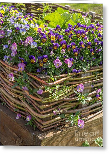 Owner Greeting Cards -  Garden Bed with weave  Greeting Card by Iris Richardson
