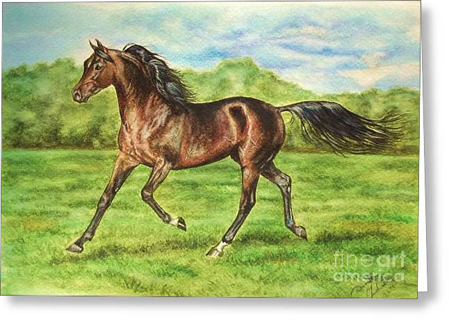 Equestrian Prints Pastels Greeting Cards -  Gharib- bay arabian stallion Greeting Card by Dorota Zdunska