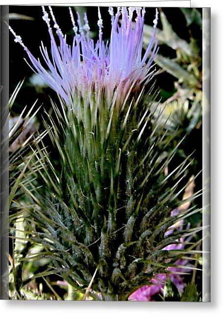 Glowing Purple Thisle Flower Greeting Card by Danielle  Parent