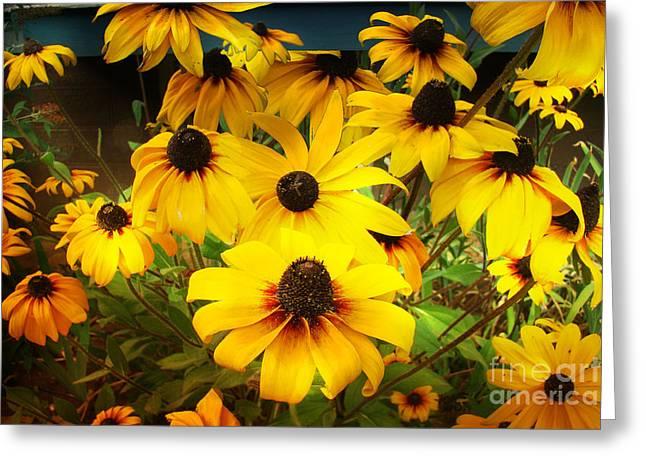 Black Eyed Susan Print Greeting Cards -  Golden Jerusalem Floral Greeting Card by Beverly Guilliams