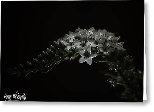 Gooseneck Loosestrife Greeting Cards -  Gooseneck Loosestrife Greeting Card by Roman Wilshanetsky