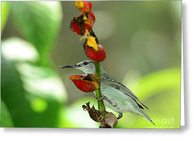 Bird On A Stem Greeting Cards -  Green is Beautiful Greeting Card by Maria Martinez