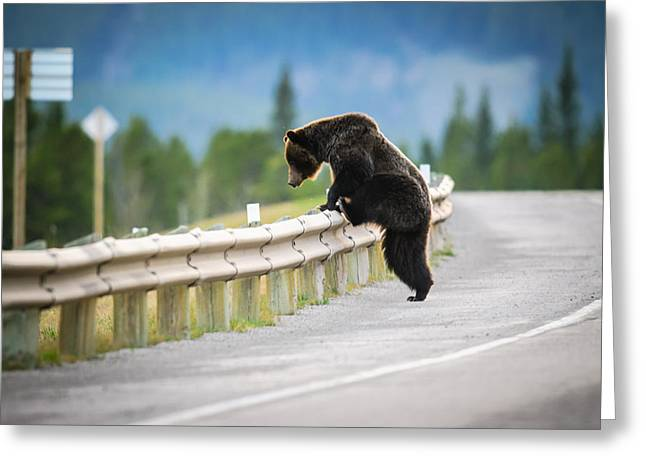Brandon Smith Greeting Cards -  Grizzly Bear Greeting Card by Brandon Smith