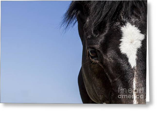 Horse - Dark Bay II Greeting Card by Holly Martin