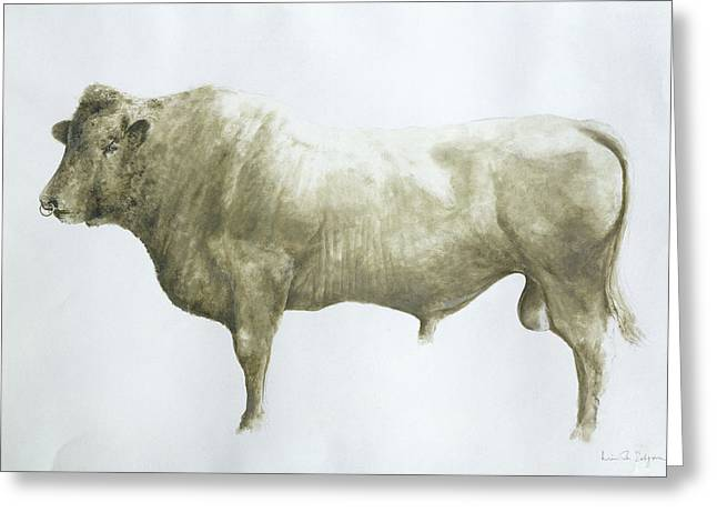 Signature Greeting Cards -  Islay Bull Greeting Card by Lincoln Seligman