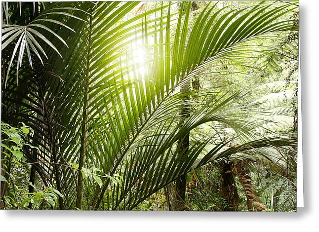 Tropical Photographs Photographs Greeting Cards -  Jungle light Greeting Card by Les Cunliffe