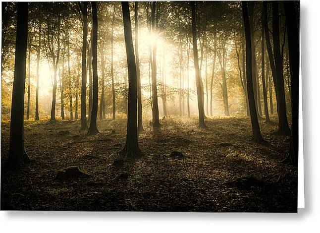 King Greeting Cards -  Kings Wood in Autumn Greeting Card by Ian Hufton
