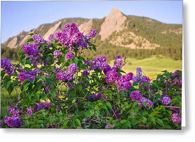 Lilac Greeting Cards -  Lilac Flowers - Boulder Colorado Greeting Card by Aaron Spong
