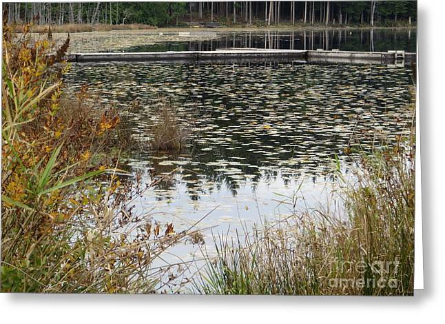 Lilly Pad Greeting Cards -  Lily Pads on Whonnock Lake Greeting Card by Joyce Gebauer