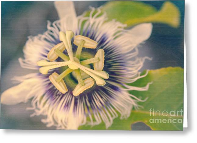 I Fiori Greeting Cards -  Linnocence Dans Les Jardins Greeting Card by Sharon Mau
