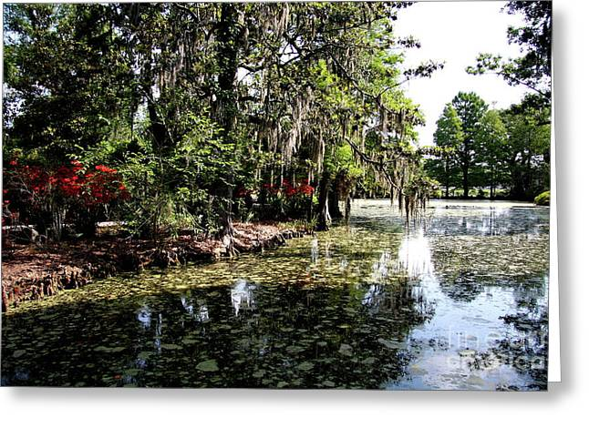 Magnolia Plantation Gardens Greeting Card by Christiane Schulze Art And Photography