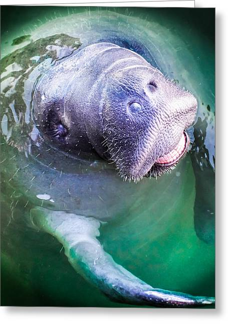 Eyelash Greeting Cards -  Manatee World Greeting Card by Karen Wiles