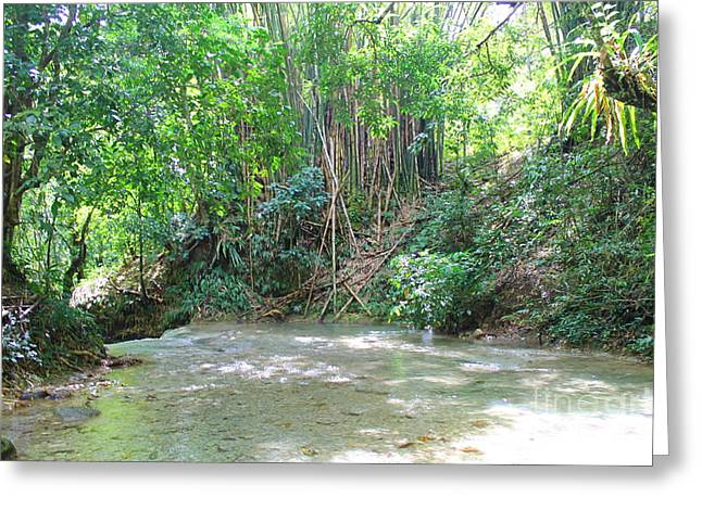 Mayfield Greeting Cards -  Mayfield Falls Jamaica 11 Greeting Card by Debbie Levene