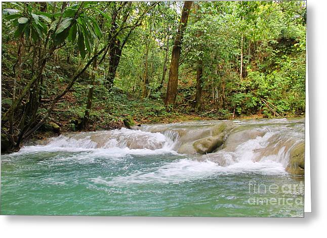 Mayfield Greeting Cards -  Mayfield Falls Jamaica 7 Greeting Card by Debbie Levene