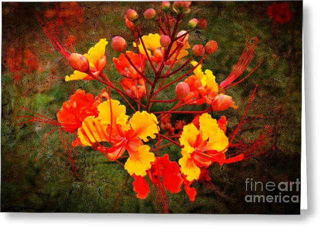 Crosswalk Greeting Cards -  Mexican red bird of paradise Greeting Card by Beverly Guilliams