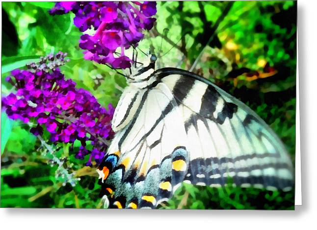 Fushia Greeting Cards -  Monarch Butterfly Greeting Card by SiriSat