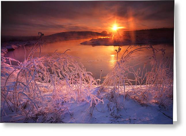 Morning Hors Frost Greeting Card by Ray Mathis