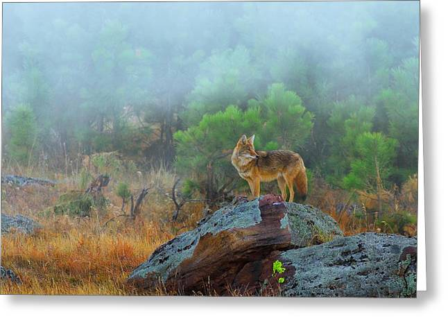 The Great Outdoors Greeting Cards -  Morning Patrol  Greeting Card by Kadek Susanto