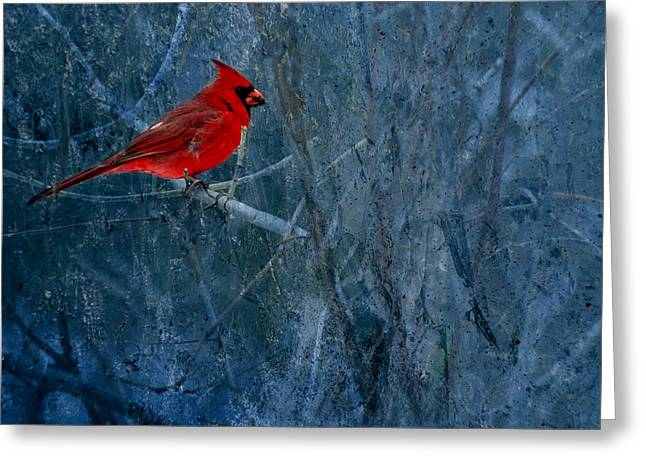 Male Northern Cardinal Greeting Cards -  Northern Cardinal Greeting Card by Thomas Young