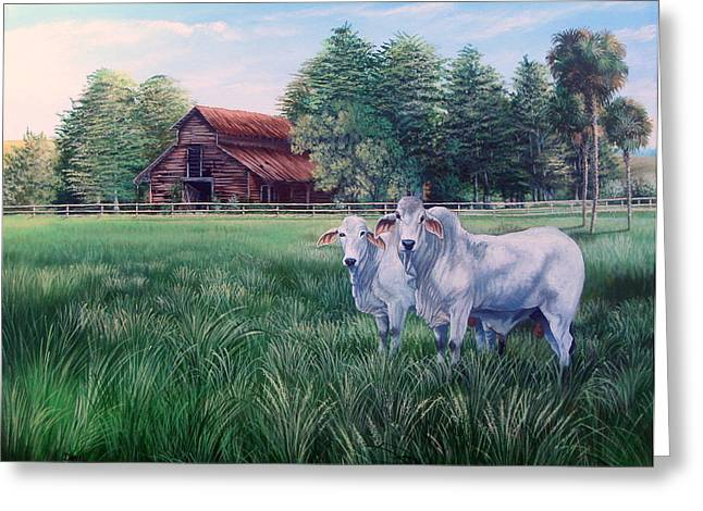 Brahma Bull Greeting Cards -  Okeechobee Brahma Bulls- Red Barn Greeting Card by Daniel Butler