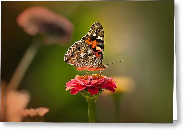 Concord Greeting Cards -  Painted Lady summer profile Greeting Card by Sylvia J Zarco