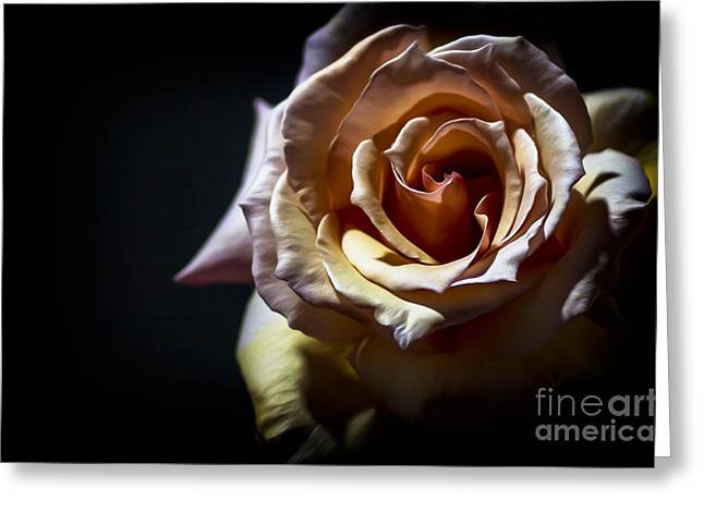Canvas Floral Greeting Cards -  Painted Rose Greeting Card by Holly Martin