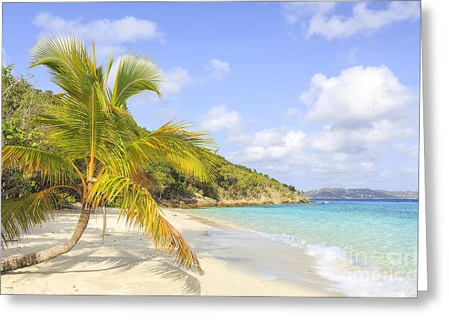 Recently Sold -  - Ocean Vista Greeting Cards -  Palm Tree On Caribbean Beach Greeting Card by Ken Brown