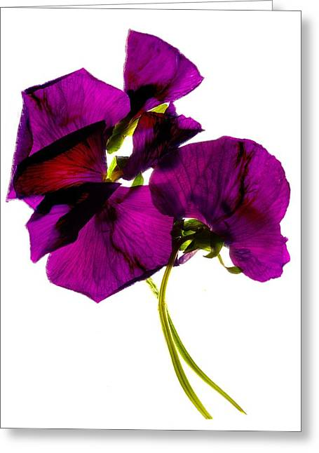 Tasteful Digital Art Greeting Cards -  Pansies III Greeting Card by Julia McLemore