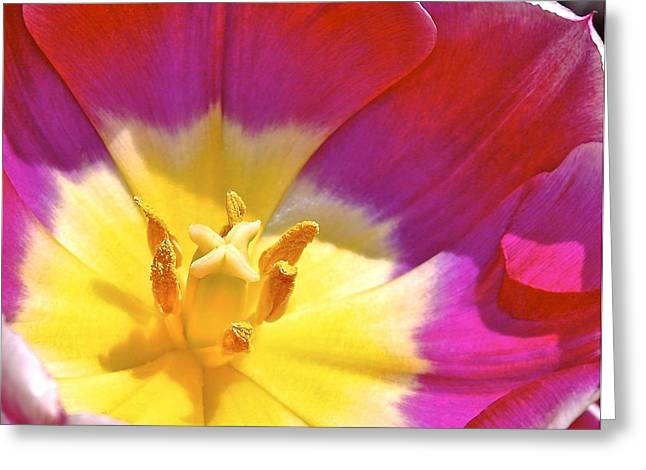Fauna Pyrography Greeting Cards -   Pistil and Stamens of a Tulip Greeting Card by DUG Harpster
