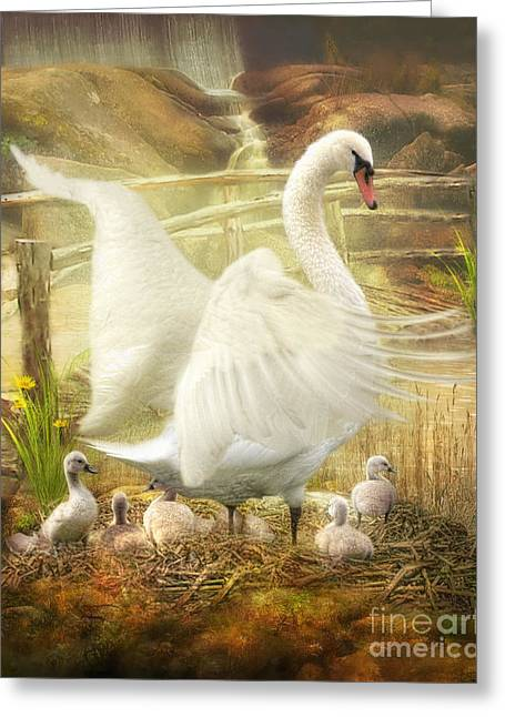 Mute Swan Greeting Cards -  Quiet Mornings Greeting Card by Trudi Simmonds