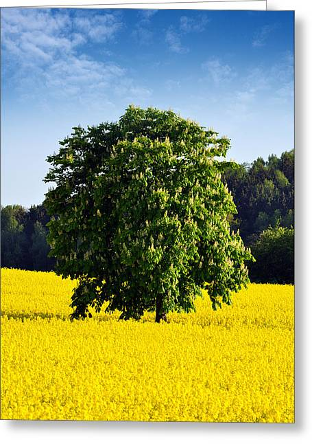 Rape Greeting Cards -  Rapeseed Field  Greeting Card by Aged Pixel