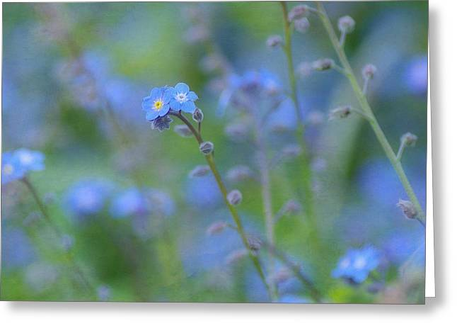 """forget Me Not Flowers"" Greeting Cards -  Rhythm In Blues Greeting Card by Fraida Gutovich"