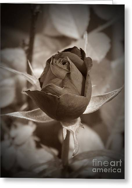 Rosebud Sepia Greeting Card by Chalet Roome-Rigdon