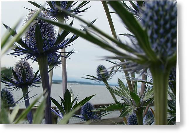 Height Mixed Media Greeting Cards -  Sea Holly  Greeting Card by Beverly Guilliams