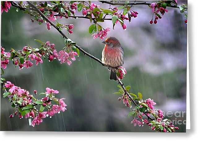 Beautiful Scenery Greeting Cards -  Singing in the Rain  2   Greeting Card by Nava  Thompson