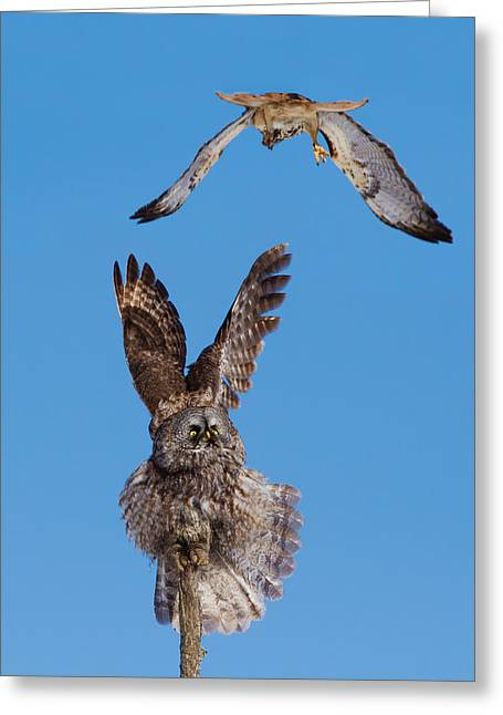 Unique Owl Greeting Cards -  Sky Battle Greeting Card by Mircea Costina Photography