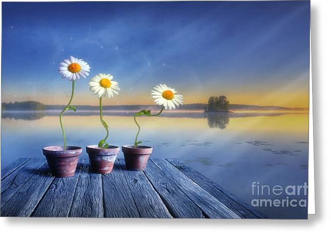 Daisy Digital Greeting Cards -  Summer morning magic Greeting Card by Veikko Suikkanen