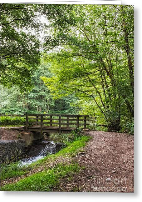 Cannock Chase Greeting Cards -  The Bridge Birches Valley Cannock Chase Greeting Card by Ann Garrett