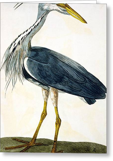 The Heron  Greeting Card by Peter Paillou