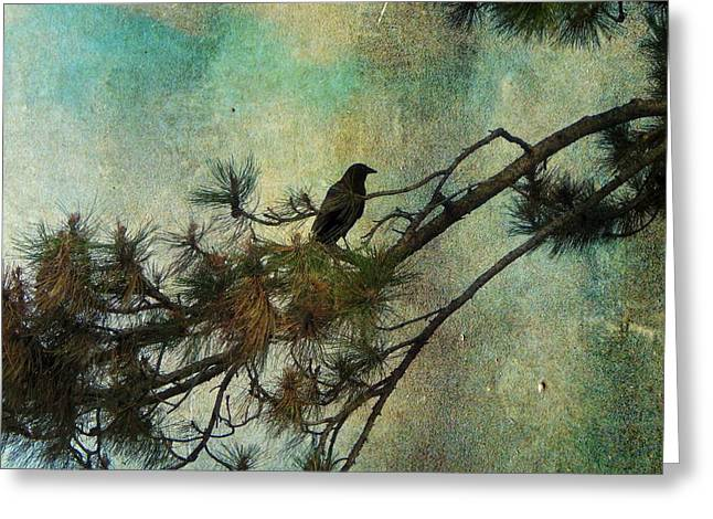 Crows In Trees Greeting Cards -  The Old Pine Tree Greeting Card by Gothicolors Donna Snyder