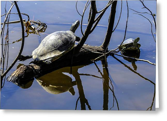 Turtles Greeting Cards -  Turtle Doing Yoga  Greeting Card by Zina Stromberg