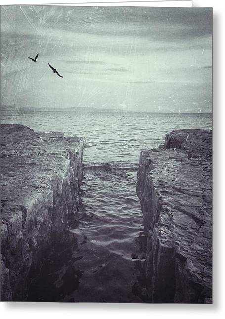 Vermont Lake Champlain Shoreline Black And White Greeting Card by Andy Gimino