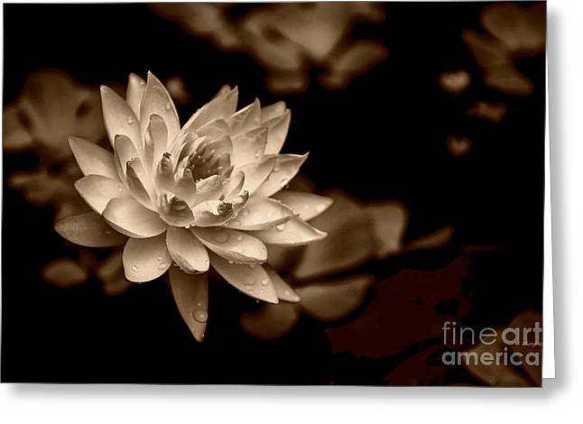 Sauna Greeting Cards -  Water Lily sepia Greeting Card by Cheryl Young