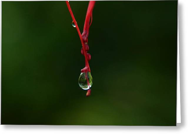Waterdrop Greeting Card by Michelle Meenawong