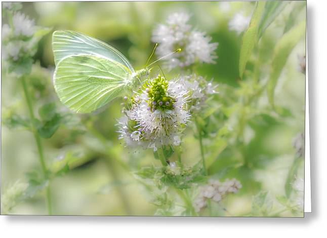 Concord Greeting Cards -  White Cabbage Butterflys Garden Greeting Card by Sylvia J Zarco